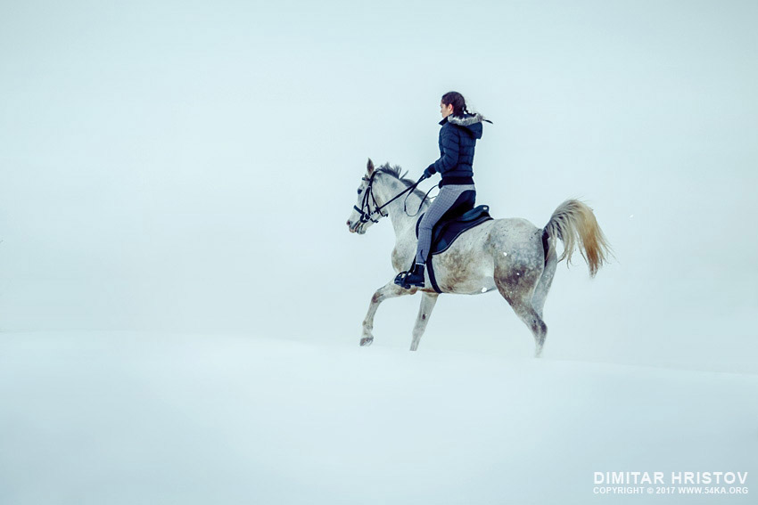 White horse on the snow photography top rated featured equine photography  Photo