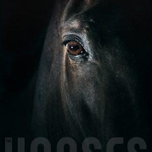Black horse eye – Beautiful close up