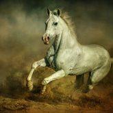 White horse – Running wild