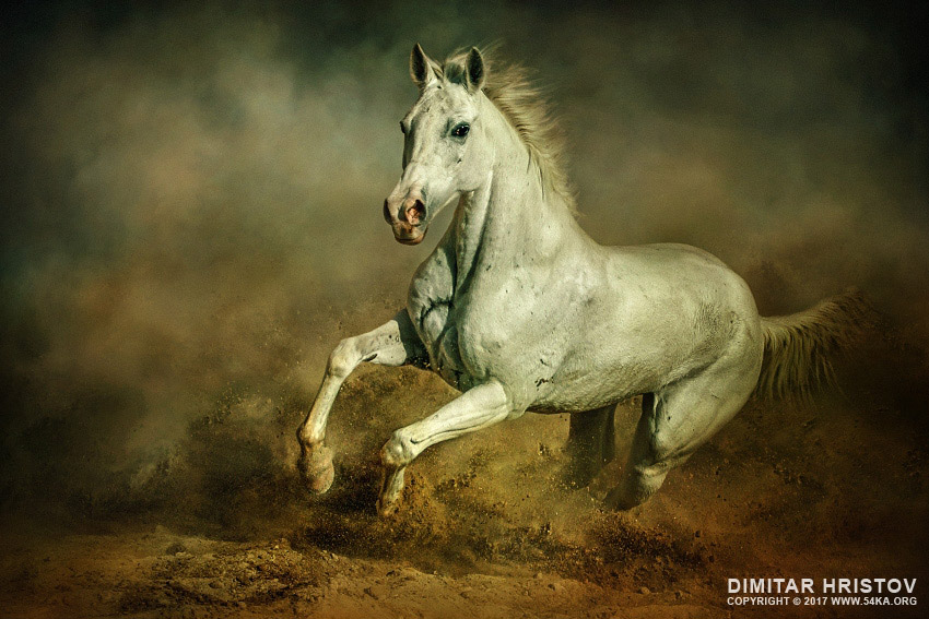 White running horses - photo#35