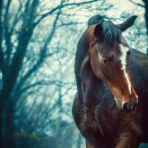 Winter forest – Horse portrait