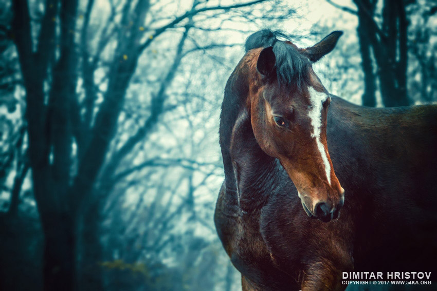 Winter forest   Horse portrait photography equine photography animals  Photo