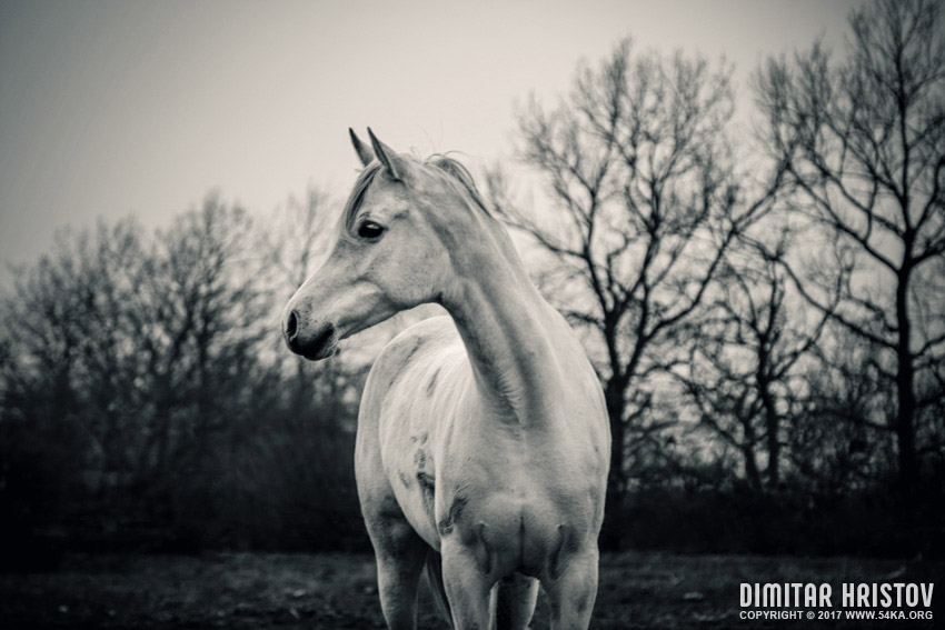 Calm white horse on the forest background photography top rated featured equine photography black and white animals  Photo