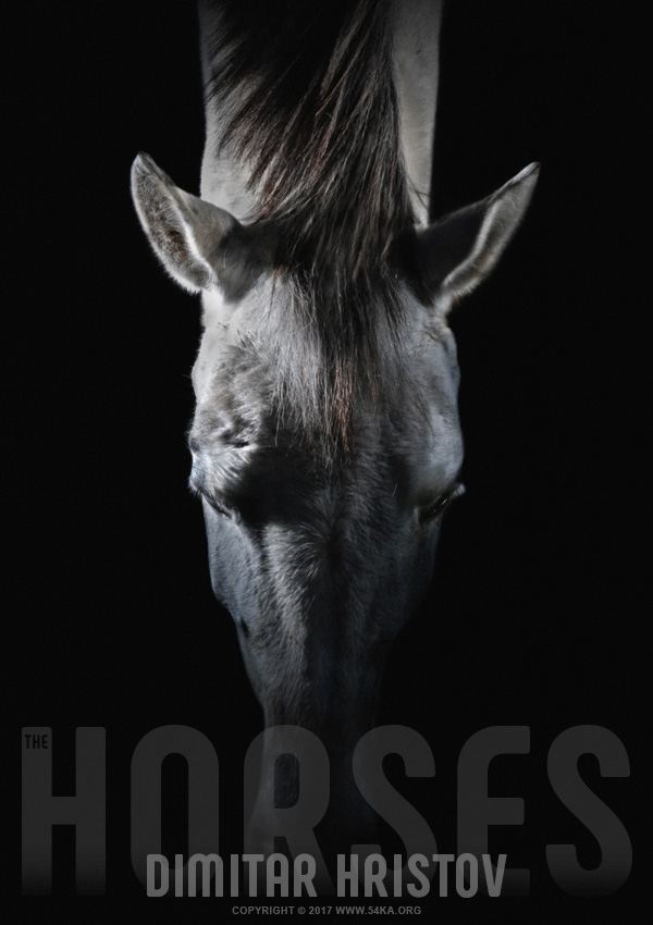 Equine portrait   White horse head on top photography featured equine photography animals  Photo