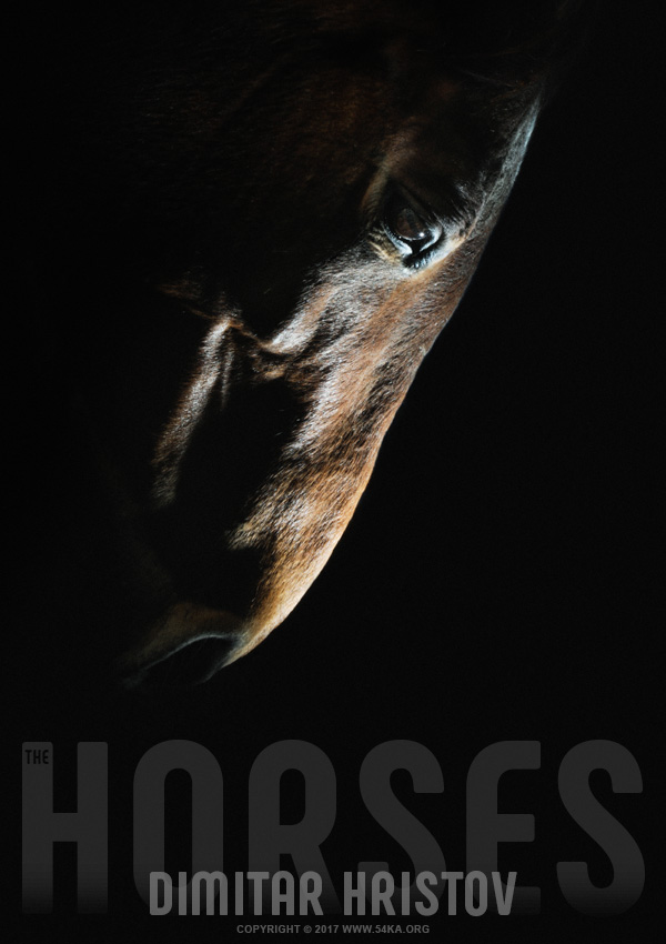 Horse head   strobist art portrait photography featured equine photography animals  Photo