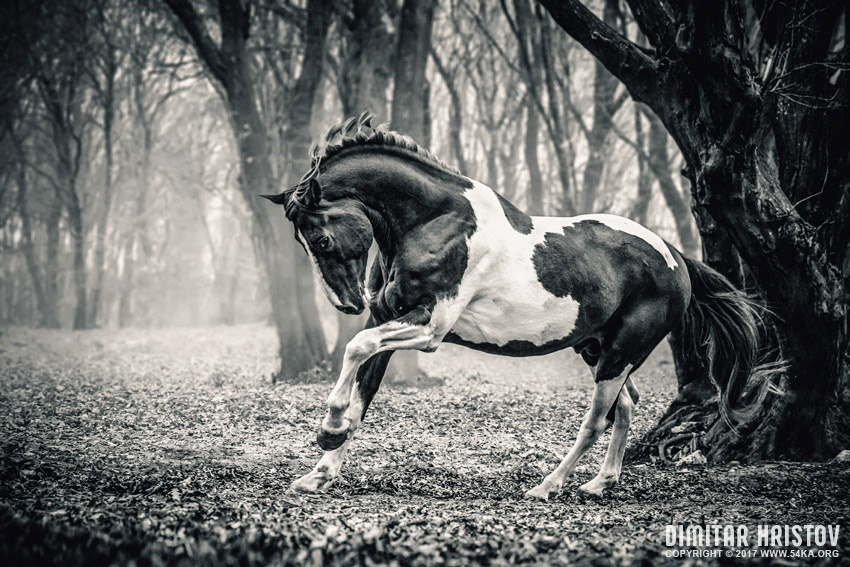 Horse in the forest photography equine photography black and white animals  Photo