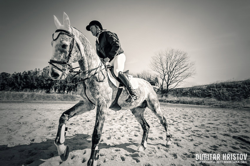 Horse training photography daily dose black and white  Photo