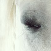 White horse beautiful eye