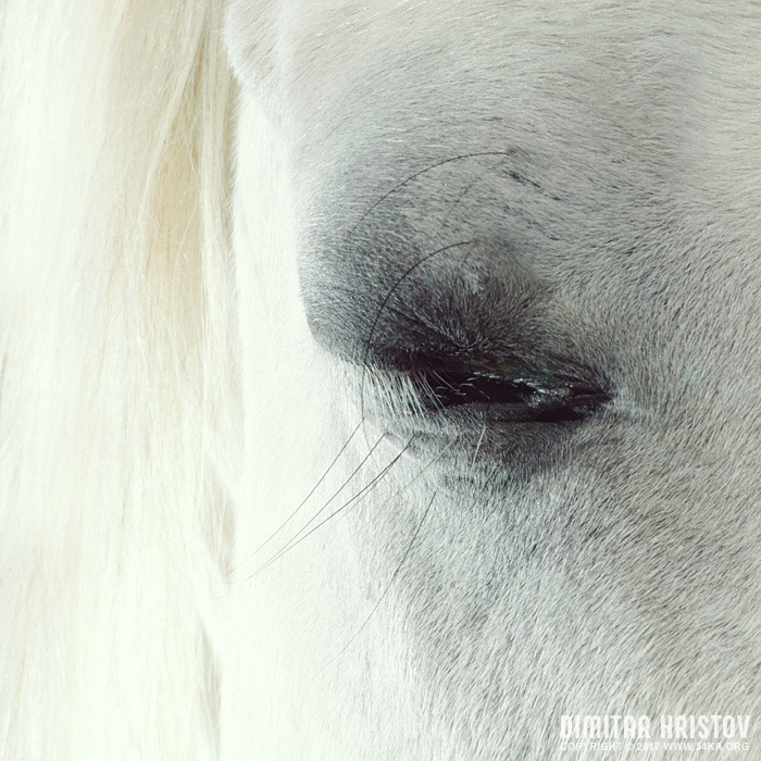 White horse beautiful eye photography featured equine photography animals  Photo