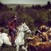 A lone cowboy