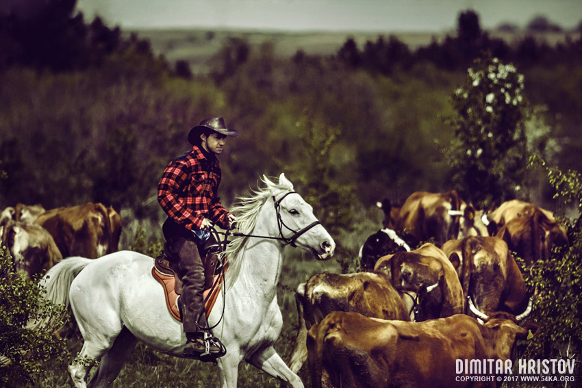 A lone cowboy photography featured equine photography animals  Photo