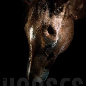Bown horse portrait