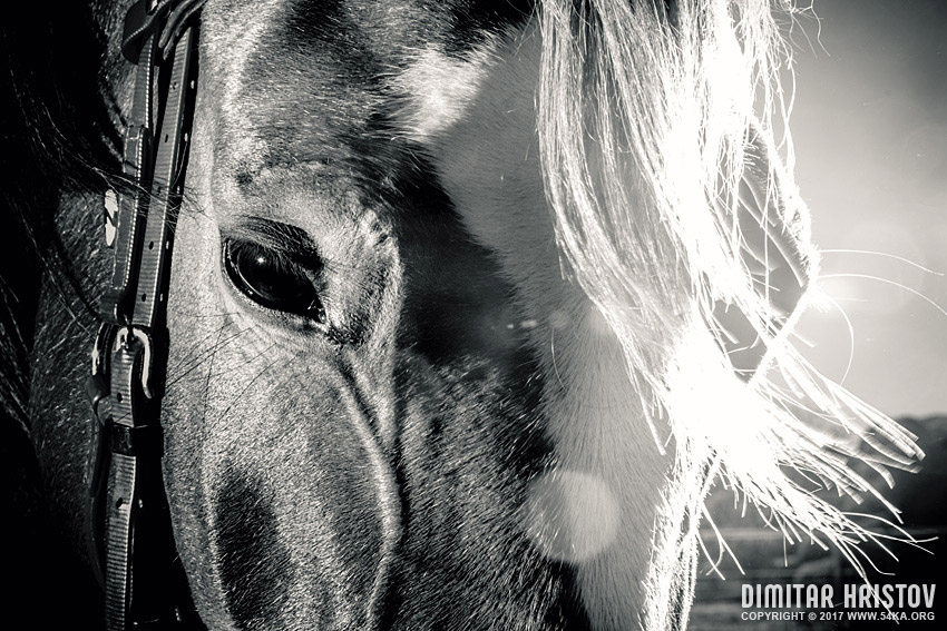 Horse face in black and white photography equine photography black and white animals  Photo