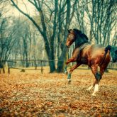 Horse in the beautiful forest