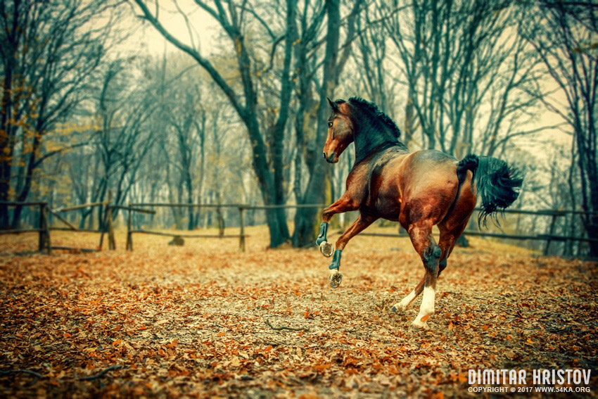 Horse in the beautiful forest photography top rated featured equine photography animals  Photo