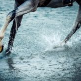 Horse legs running on the water