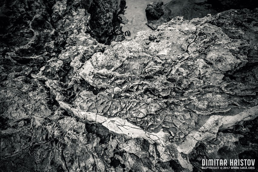 Sea rock texture photography other daily dose black and white  Photo