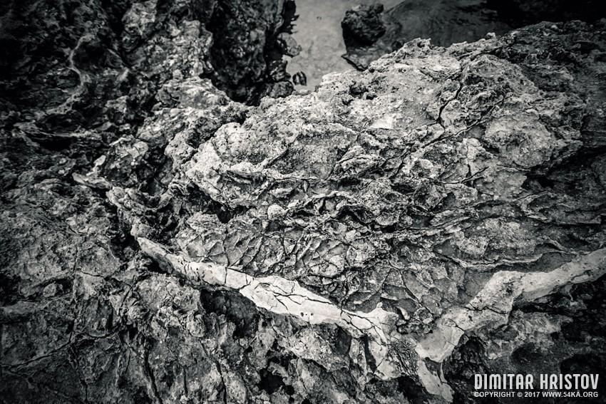 Sea rock texture daily dose  Photo
