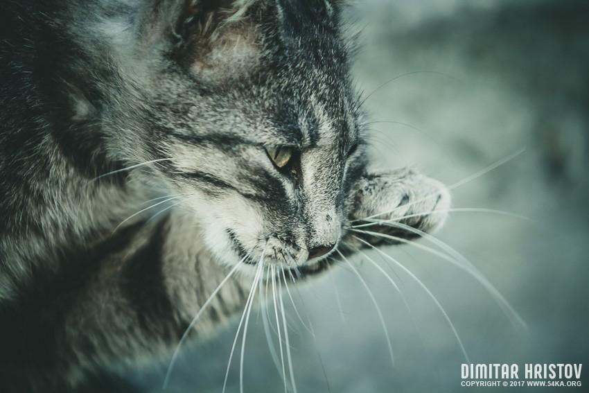 Cat portrait close up photography animals  Photo