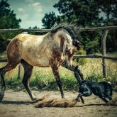 Dog and horse playing together