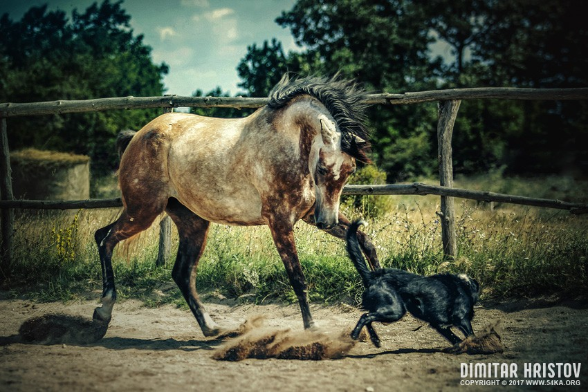 Dog and horse playing together photography featured equine photography animals  Photo