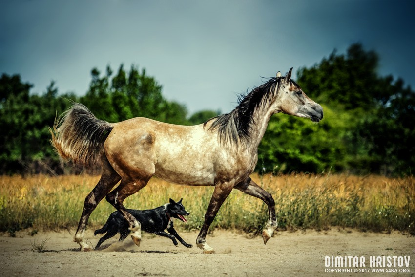 Horse and dog photography featured equine photography animals  Photo