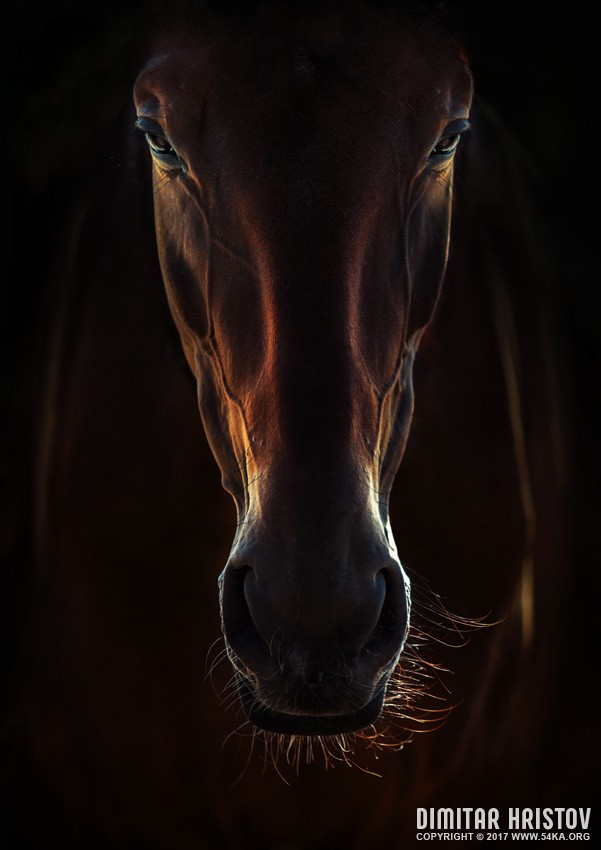 Portrait Of A Brown Horse Close Up photography featured equine photography animals  Photo