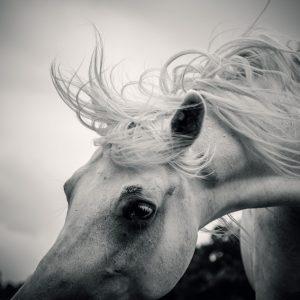 Shaggy morning horse