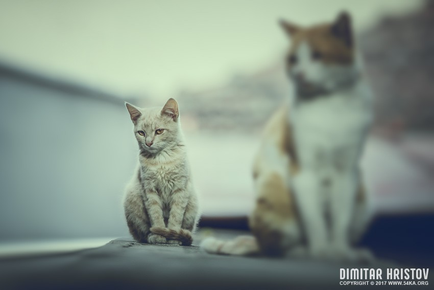 Sitting cat   cinematic colors photography top rated featured animals  Photo