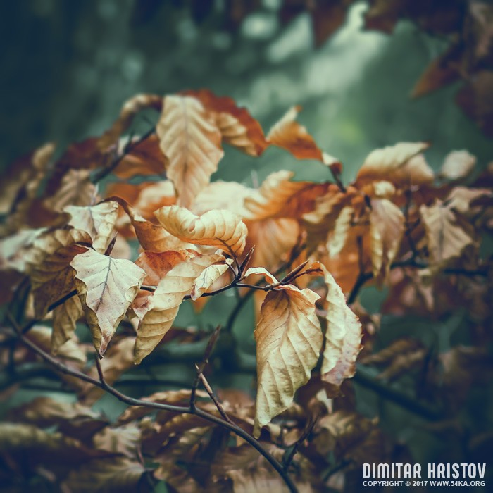 Autumn yellow leaves photography other featured  Photo
