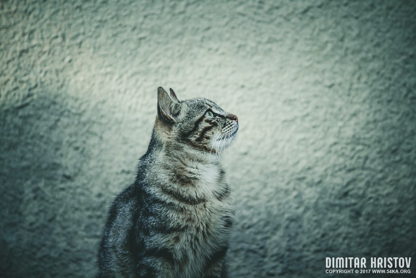Cute grey cat photography animals  Photo