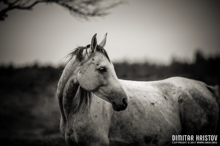 White horse autumn portrait photography equine photography animals  Photo