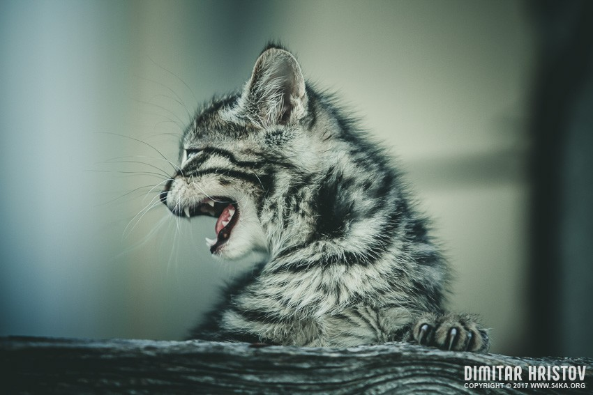 Lovely little cat photography animals  Photo