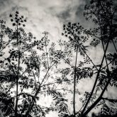 Plants – Black and White