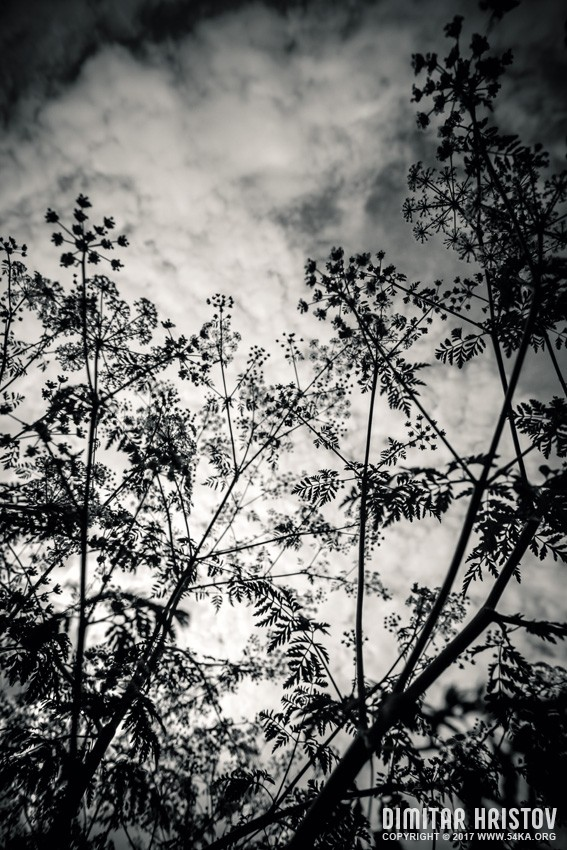 Plants   Black and White photography other featured black and white  Photo