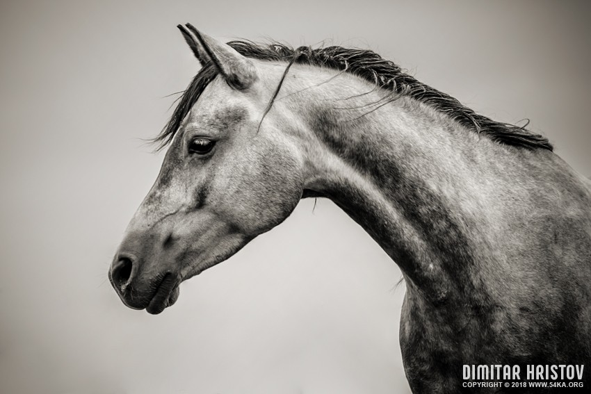 Black And White Horse Head Photography