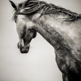 The Lonely Horse