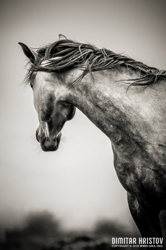 The Lonely Horse photography featured equine photography black and white animals  Photo