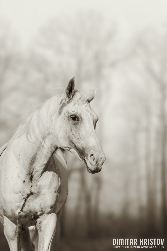 Lone white wild horse II photography equine photography animals  Photo