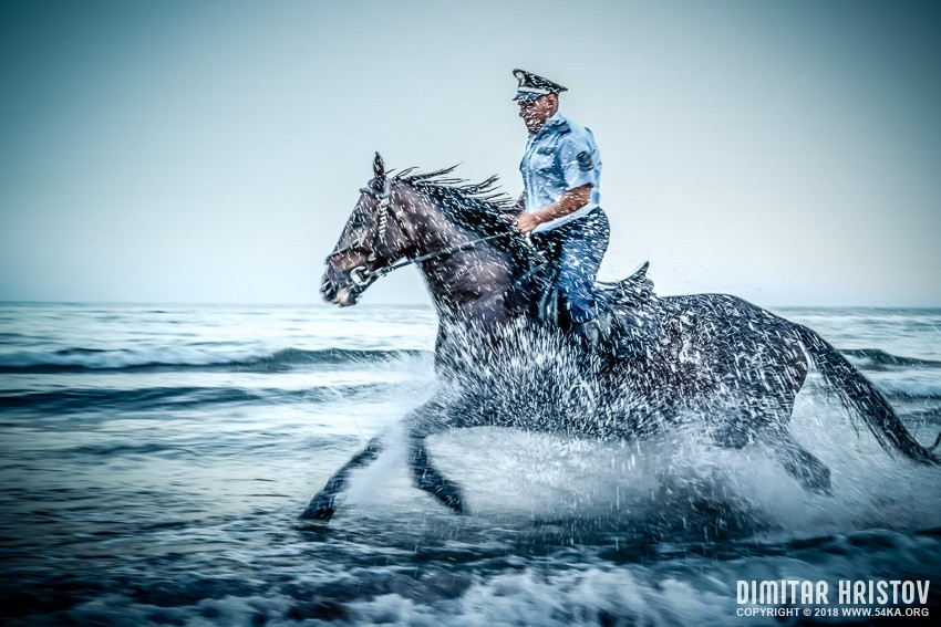Wild Gallop in The Water photography featured extreme equine photography animals  Photo