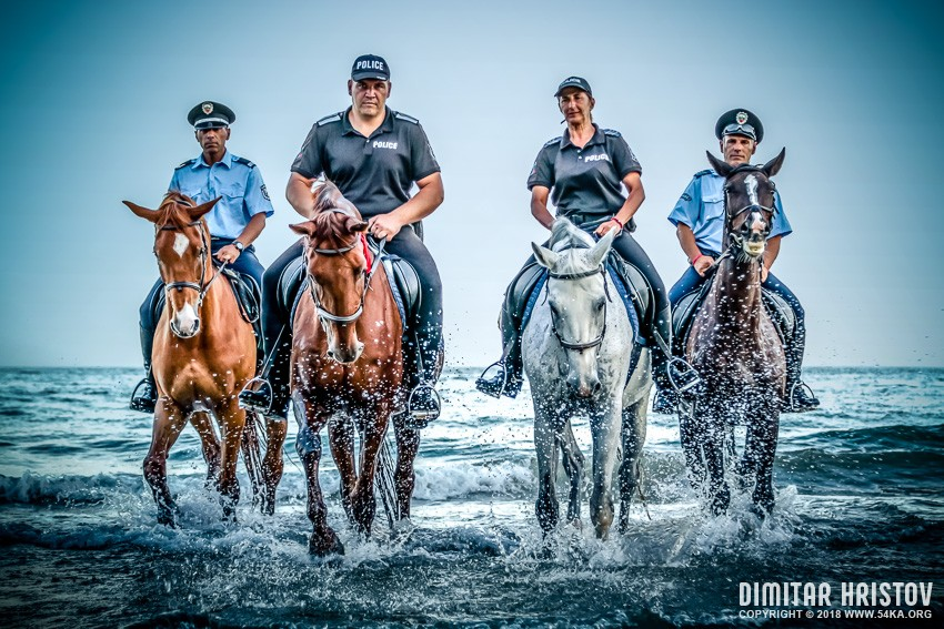Police   Running horses on the water photography galleries featured equine photography animals  Photo