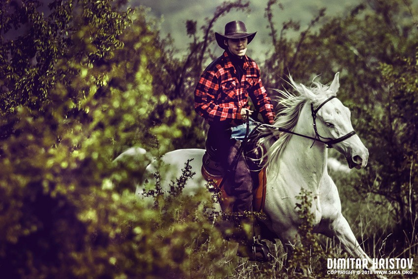 Cowboy Riding Horse On Field photography featured animals  Photo