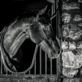 Black Horse In The Stable Box