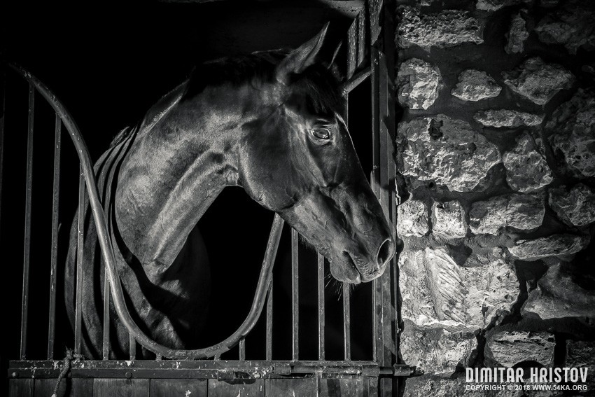 Black Horse In The Stable Box photography equine photography black and white animals  Photo