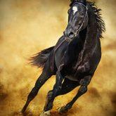 Black Horse – Running Wild
