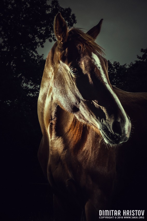 Horse Portrait   Equestrian Beauty photography featured equine photography animals  Photo