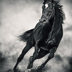 Black Horse – Running Wild – Black and White