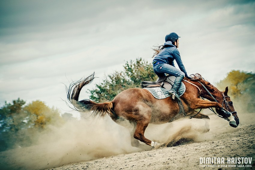 Braveheart   Horse Fall Down Crash photography top rated featured extreme equine photography animals  Photo