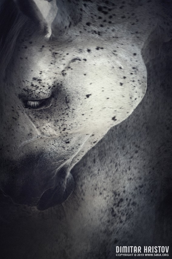 Close up portrait of white horse photography featured equine photography animals  Photo