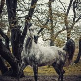 Horse portrait autumn in the forest